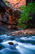 Utah National Parks Prints - Utah - Virgin River 4 Print by Terry Elniski