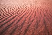 Utah Coral Pink Sand Dunes Print by Ryan Kelly