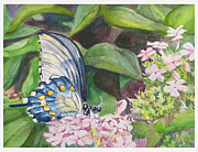 Vacition Butterfly Print by Judy Loper