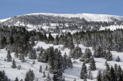 Snow-covered Landscape Photo Prints - Vail Pass Colorado Winter Print by Brendan Reals