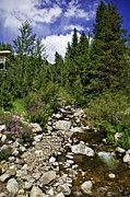 Colorado Stream Prints - Vail Stream in the Summer 2 Print by Madeline Ellis