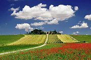 Vineyard Landscape Framed Prints - Val Dorcia In Clouds Framed Print by Massimiliano Natale