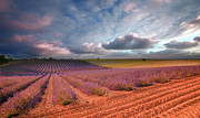 Plateau Art - Valensole (france) by Eric Rousset