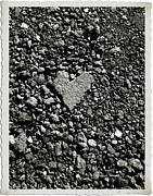 On The Ground Posters - Valentine in the Asphalt Poster by Cheryl Young