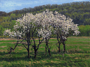 Plum Blossoms Paintings - Valley Plum Thicket by Bruce Morrison