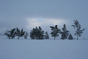 Winter Trees Photos - Valley Sentinels by Holly Ethan