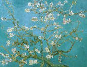 Flowers Canvas Painting Prints - Van Gogh Blossoming Almond Tree Print by Vincent Van Gogh