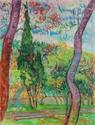 Fathers Paintings - Van Gogh Garden of Saint Paul Hospital by Vincent Van Gogh