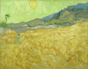 Vincent Van Gogh - Van Gogh Wheat Fields...