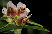  Large Format Prints - Vanda Print by Joseph Placheril