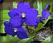 Orchids Digital Art - Vanda by Mindy Newman