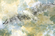 Blur Digital Art Prints - Vanishing Seagull Print by Melanie Viola