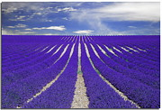 Field. Cloud Posters - Vanishing Smell -- Lavender Poster by Nespyxel