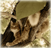 Long Haired Cat Posters - Vantage Point Poster by ShaddowCat Arts - Sherry