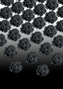 Black Rose Prints - Varas Rose 25 Print by Per Lidvall