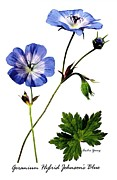 Geranium Photos - Variety Of Cranesbill by Archie Young
