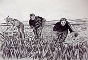 Produce Drawings Prints - Veg Pickers Kent Print by Peter Edward Green