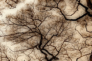 Abstract Tree Prints - Veins in The Sky Print by Cheryl Young