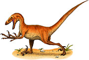 Reptiles Drawings - Velociraptor by Roger Hall and Photo Researchers