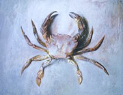 Fishermen Drawings - Velvet Crab  Study by Pg Reproductions