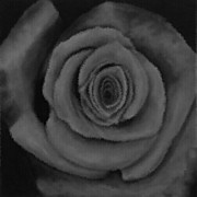 Mauve Photos - Velvet Rose without colour by Mandi Ward