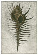 Etching Mixed Media - Venus Comb Murex by Charles Harden