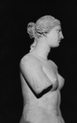 Greek Sculpture Posters - Venus de Milo Poster by Greek School