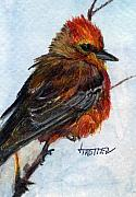 Flycatcher Originals - Vermillion Flycatcher by Jimmie Trotter