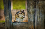 Cute Chipmunk Prints - Vermont Chippy Print by Deborah Benoit