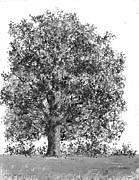 Jim Hubbard - Vermont-Sugar Maple