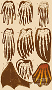 Haeckel Prints - Vertebrate Mammal Forefeet, Ernst Print by Science Source