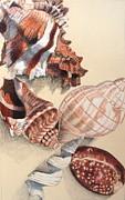 Vertical Conch Shells Print by Glenda Zuckerman