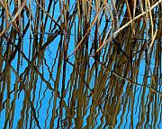 Dried Reeds Posters - Vertical Reflections Poster by Steven Milner