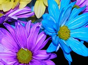 Fine_art Metal Prints - Very Colorful Flowers Metal Print by Christy Patino