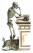 Diagram Art - Vesalius: Skeleton, 1543 by Granger