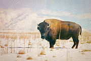 Bison Prints - Vestige of the Old West Print by Carolyn Rauh