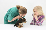 Vet Framed Prints - Vet Using An Otoscope To Examine A Pups Framed Print by Mark Taylor