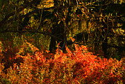 Vibrance Of Fall Print by Paul St George