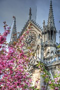Notre Dame Photos - Vibrant Cathedral by Jennifer Lyon