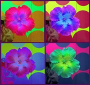 Pink Hibiscus Posters - Vibrant Flower Series 2 Poster by Jen White