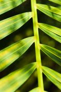 Frond Framed Prints - Vibrant tropical plant Framed Print by Quincy Dein - Printscapes