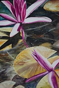 Oil On Canvas Prints - Vietnam Temple Waterlilies Print by Alla Dickson