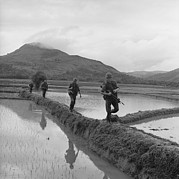 Rice Paddy Posters - Vietnam War. Us Marines Move Along Rice Poster by Everett