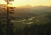 River Scenes Posters - View At Dawn Of The Tuolumne River Poster by Phil Schermeister