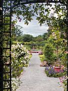 Trellis Prints - View from a Pergola Print by Jessica Jenney