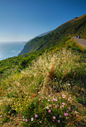 Pacific Ocean Prints Prints - View From the Pacific Coastal Highway Print by Steven Ainsworth