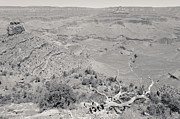 South Kaibab Trail Prints - View from the South Kaibab Trail II BW Print by Julie Niemela