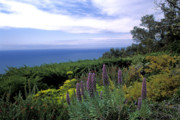 Landscape Prints Framed Prints - View from Ventana Big Sur Framed Print by Kathy Yates