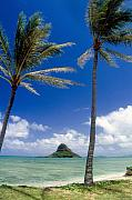 Breezy Metal Prints - View of a Bay with Palm Trees Kaneohe Bay Oahu Hawaii Metal Print by George Oze