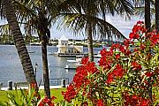 Hamilton Island Posters - View of a Boathouse in Hamilton Harbor Bermuda Poster by George Oze
